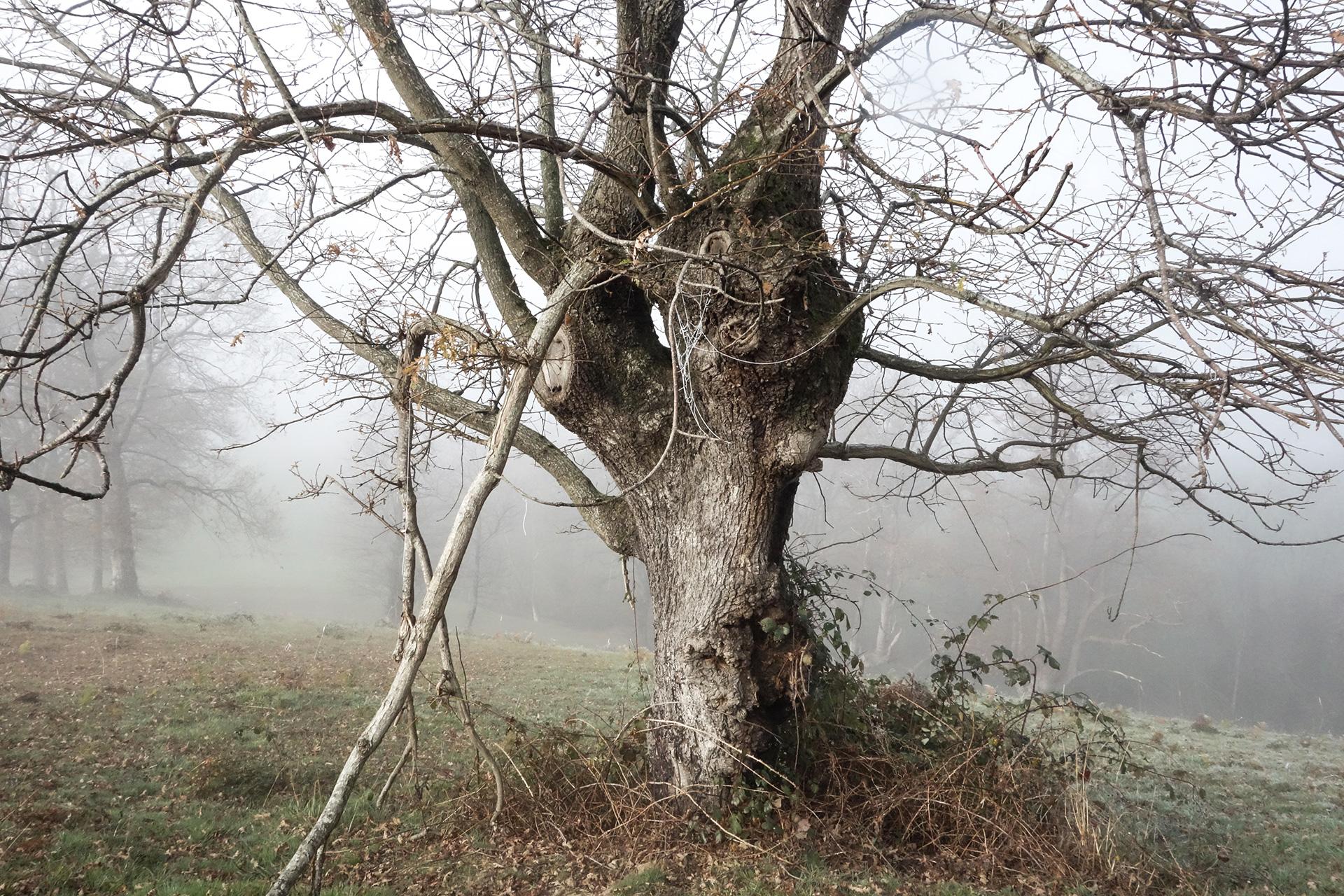 contreeb-article-ecologie2-credit-photo-agnes-forcade